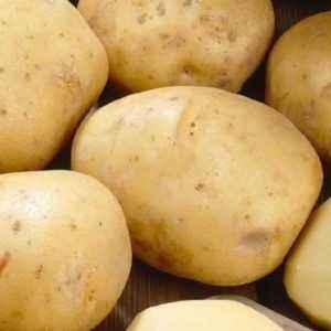 Description of Potato Jubilee