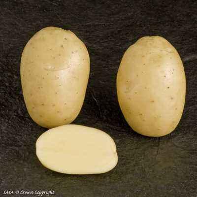 Description of Potato Lady Claire