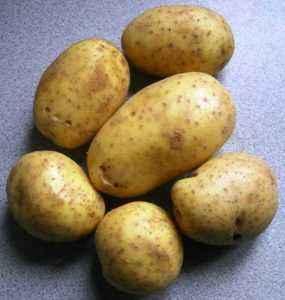 Description of Potato Sylvanas