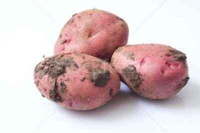 Description of Ramon Potato