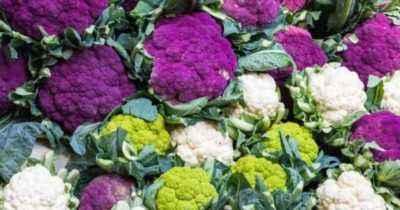Description of the best varieties of cauliflower
