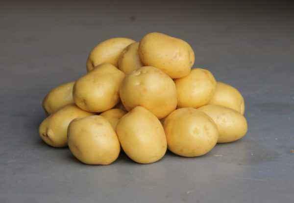 Description of the Black Prince potato variety