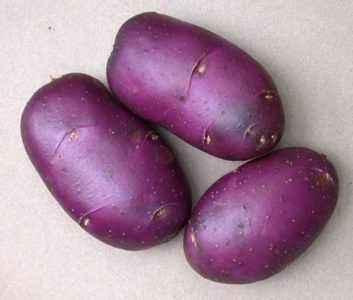 Description of the Blue Danube potato