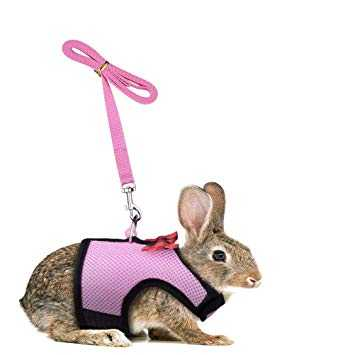 Description of the harness for the rabbit