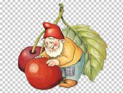 Description of the tomato Gnome