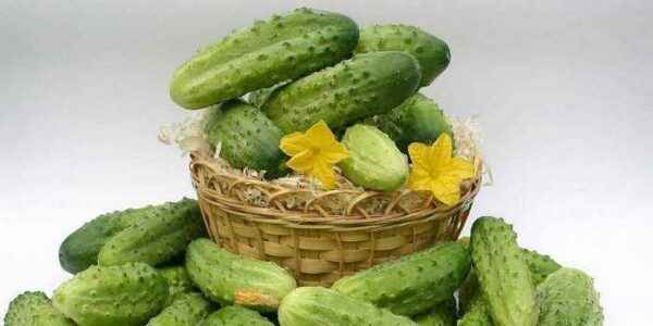 Description of the variety of cucumbers Khrustik