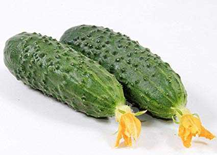 Description of the variety of cucumbers Marinda