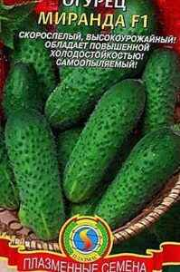 Description of the variety of cucumbers Miranda