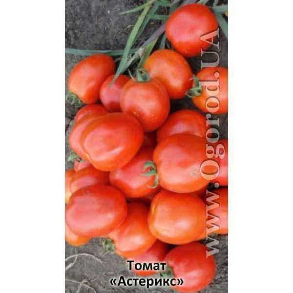 Description of Tomato Asterix