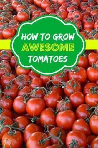Description of Tomato Aswon