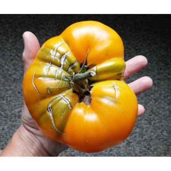 Description of tomato Giant Lemon