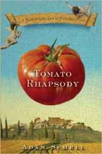 Description of tomato Rhapsody