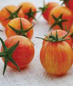 Description of tomato sunrise