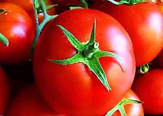 Description of tomato varieties Liang