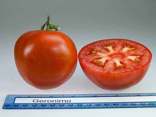 Description of tomatoes Apple varieties