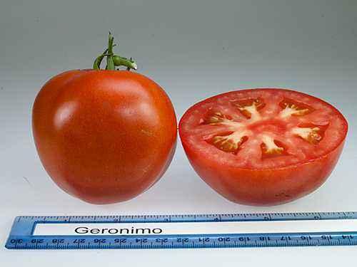 Description of tomatoes Apple varieties