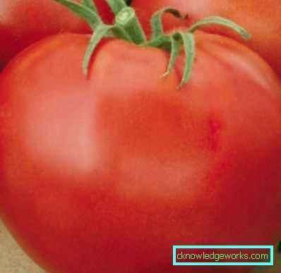 Description of tomatoes Gina TST