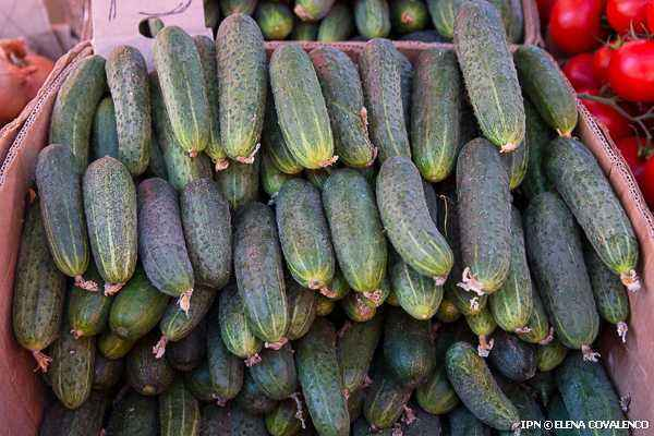 Determination of nitrates in cucumbers