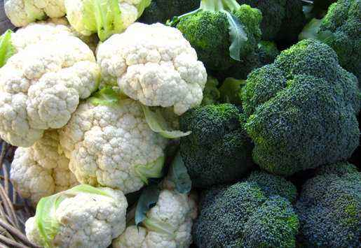 Differences of broccoli from cauliflower