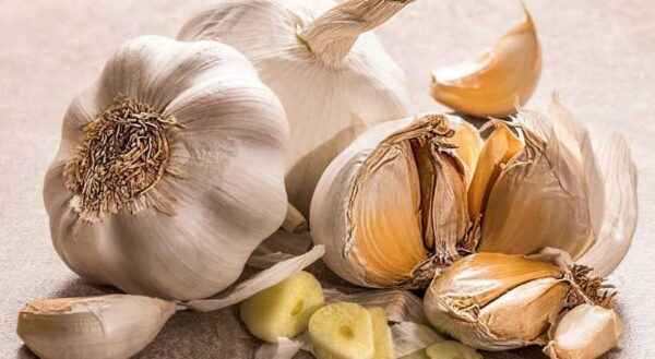 Diseases and Prevention of Table Garlic