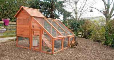 DIY chicken house construction for 10-20 hens
