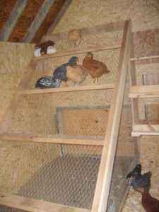 DIY perch for chickens – simple instruction