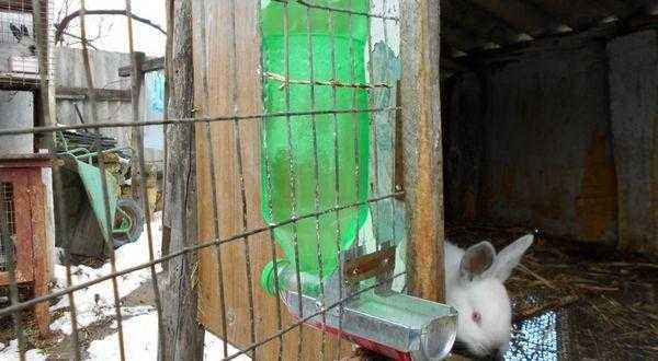 Do-it-yourself drinkers for rabbits