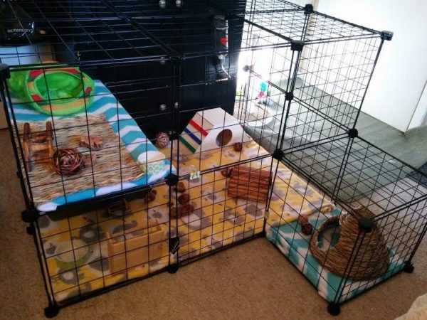 Do the rabbit cages on our own