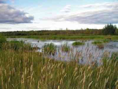 Dremlik swamp