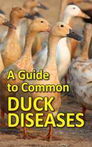 Ducklings treatment for various diseases