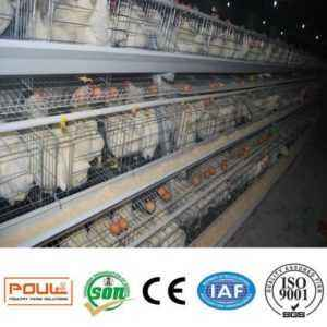 Features of broiler cages in cells at home