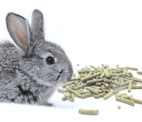 Features of granular feed for rabbits