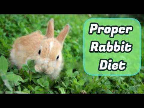 Features of the daily ration for rabbits