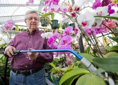 Features of the growth of orchids in nature