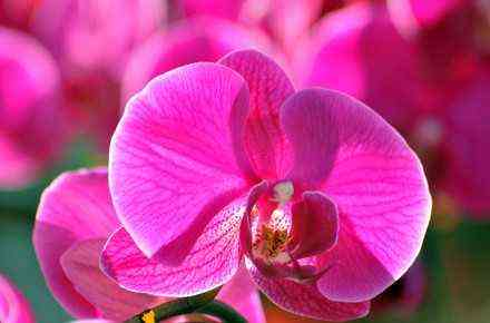Features of the growth of orchids