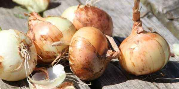 Fertilizers for onions of different types
