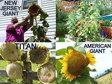 Giant variety varieties