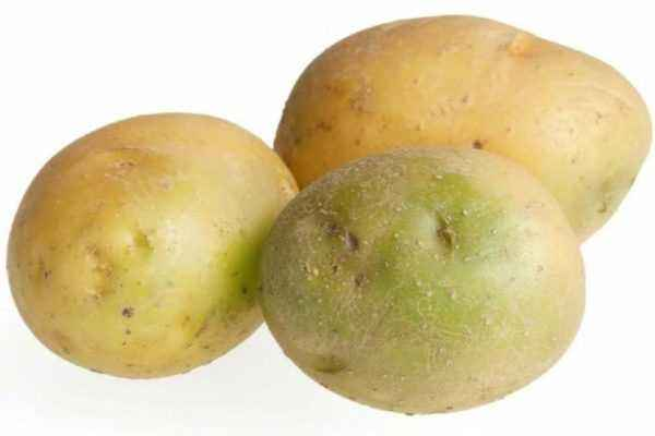 Green potato
