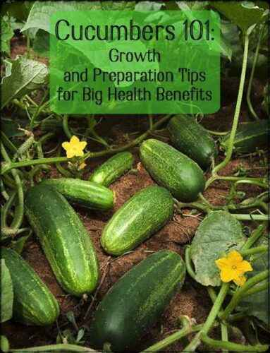 Growing cucumbers at home