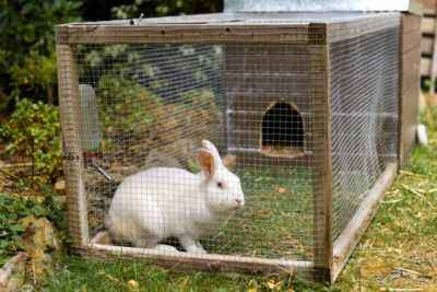 Growing rabbits at home for beginners