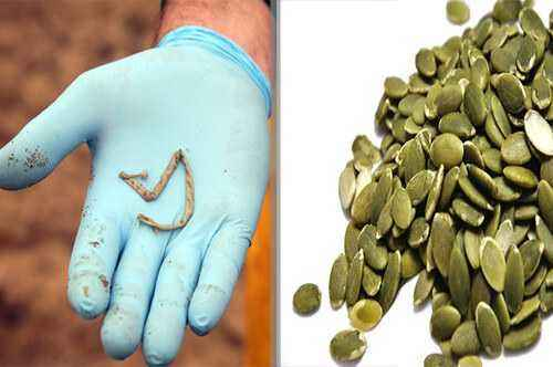 Helminthiasis pumpkin seeds