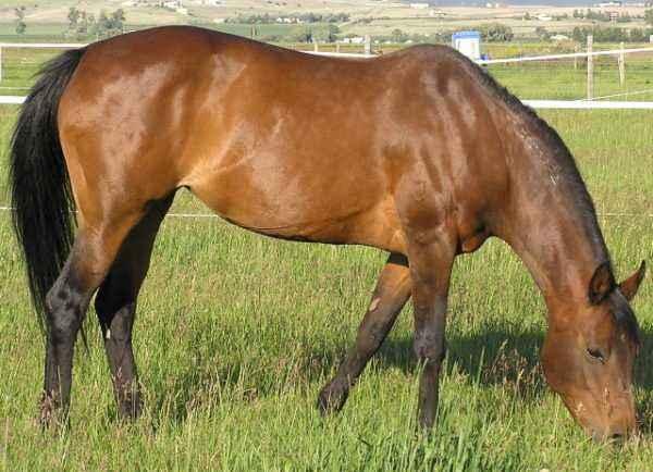 Horse bay characterization