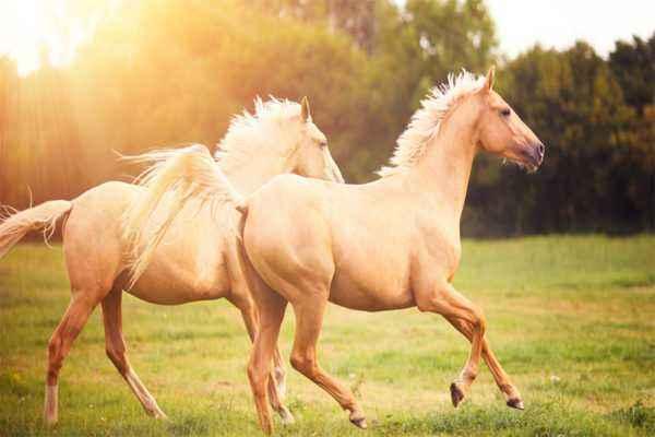 Horse life span