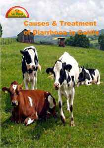 How and how to treat diarrhea in cows