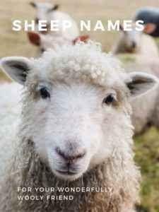 How to choose nicknames for lamb and sheep