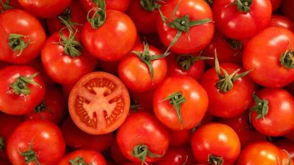 How to Feed Tomatoes with Ammonia