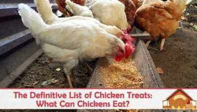 How to give fish oil to chickens and chickens