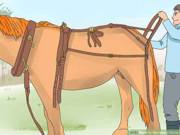 How to harness a horse