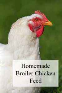 How to make a DIY broiler for chickens