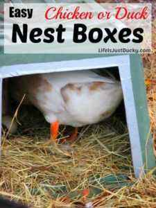How to make a duck nest